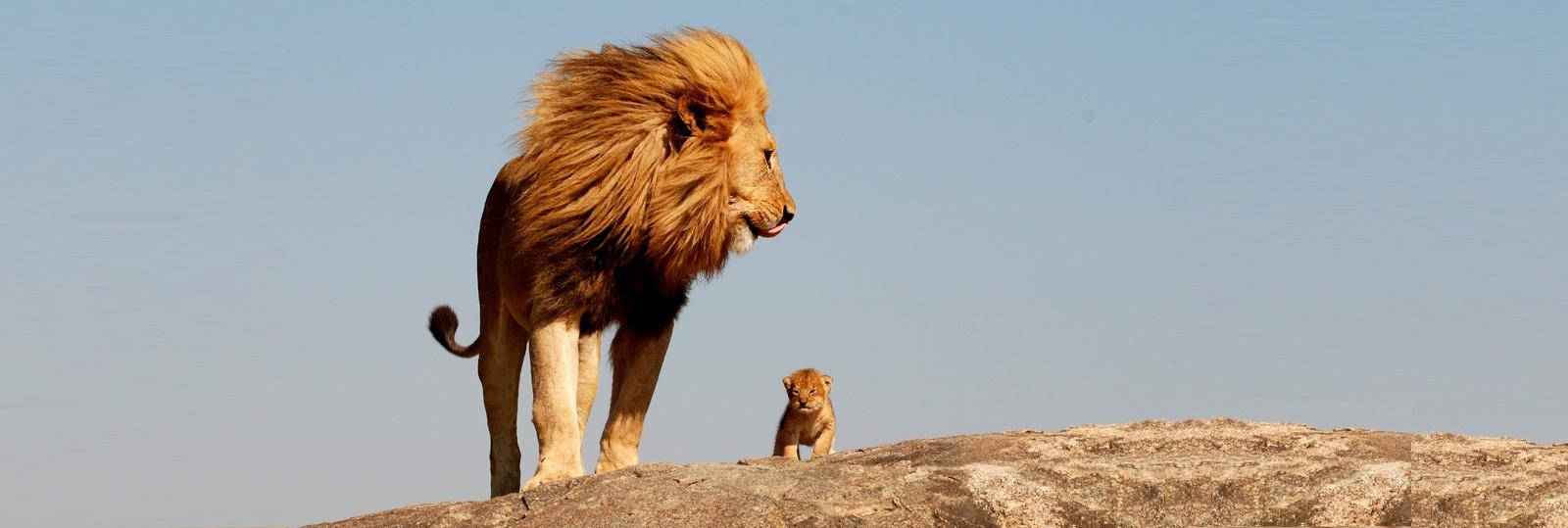 lion-cub3